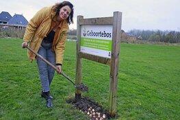 Freedom Flame bollen voor een groenere toekomst